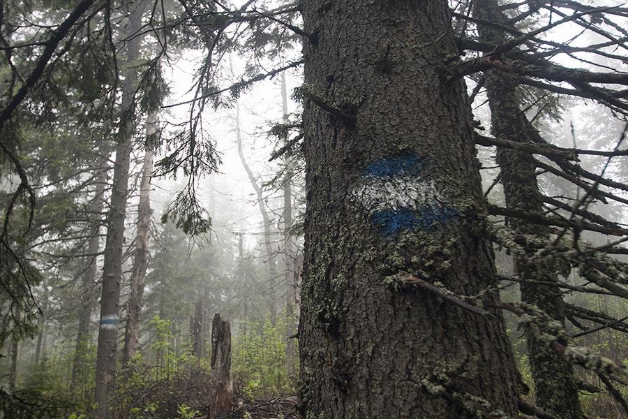 Вид маркировки тропы в нацпарке Таганай