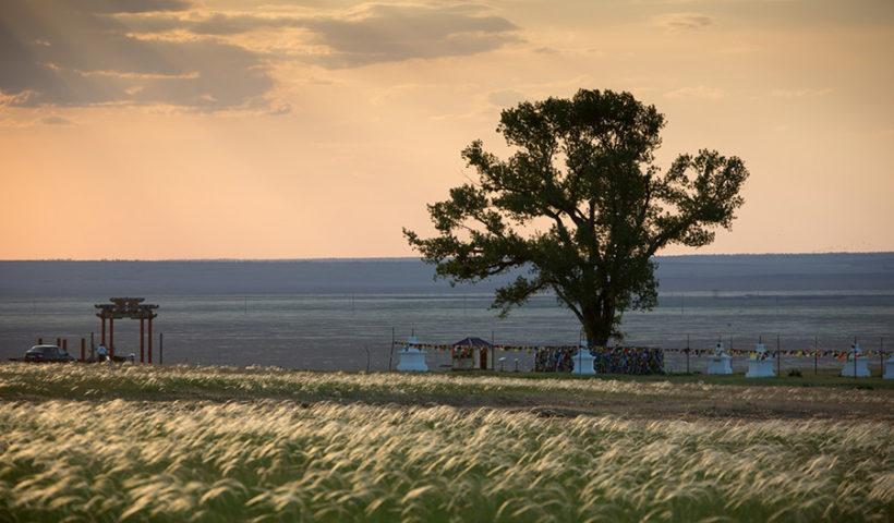 Одинокий Тополь, главное дерево России 2019 года
