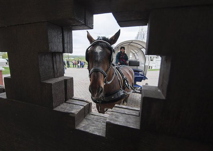 Катание на лошадях в парке Коломенское, Москва
