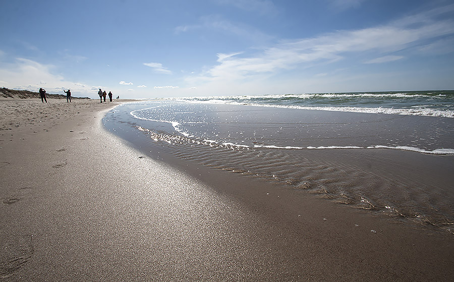 Балтика Куршской косы. На этих пляжах можно найти калининградский янтарь