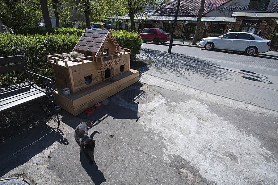 Кошачий дом в Светлогорске, Калининградская область