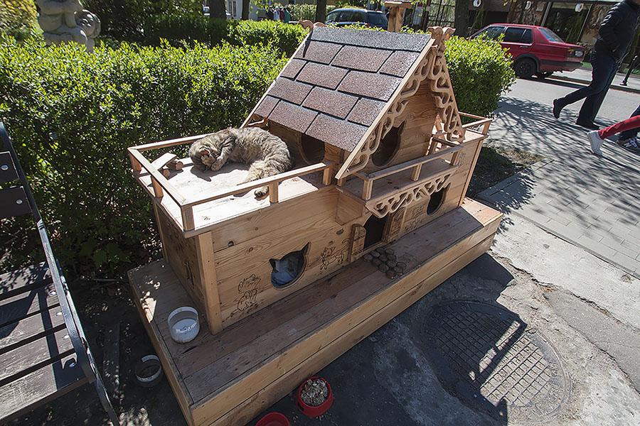 Коты- живая достопримечательность Светлогорска