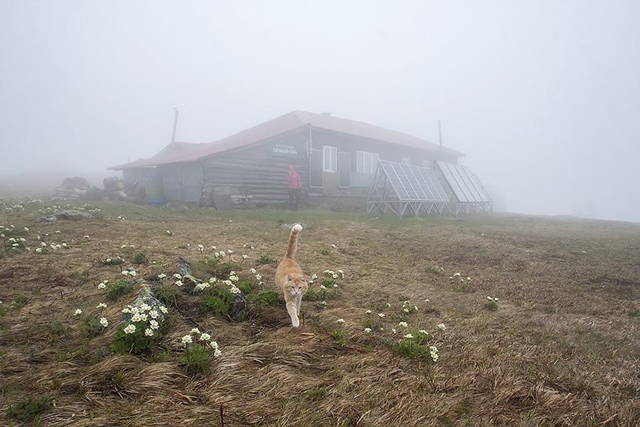 Кот Василий – хозяин приюта Метеостанция на Таганае!