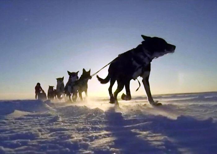 Гонка на собачьих упряжках Волга Квест