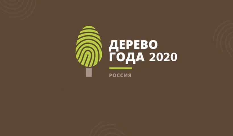 Российское дерево года 2020