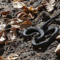 Просто о змеях. Уж обыкновенный и водяной