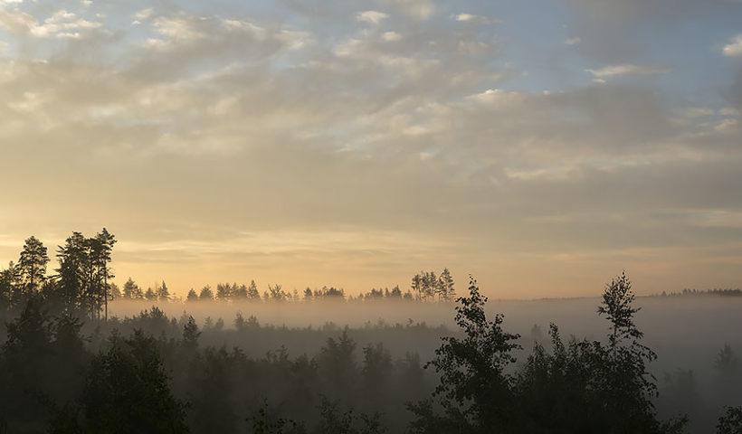 Рассвет в лесу. Хайкинг