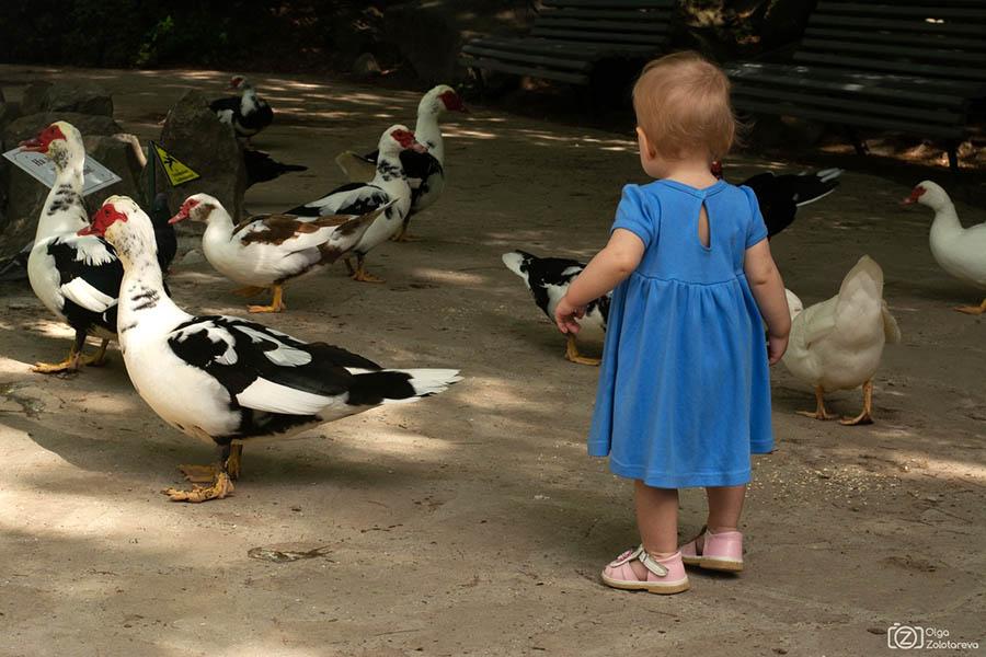 Отдых с детьми в Крыму. Зоопарк